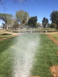 watering #4
